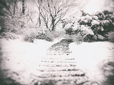 Winter Path by Vivienne Gucwa