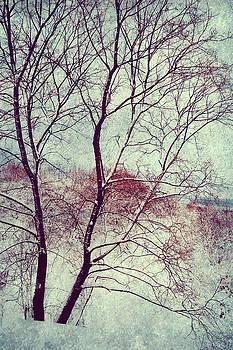 Winter Poem by Jenny Rainbow