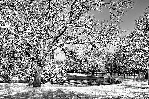 Winter Pond in Mono by Baggieoldboy