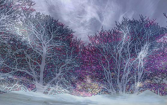 Winter Purple by Nareeta Martin