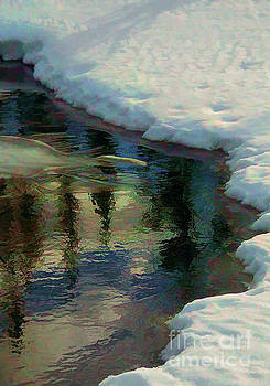 Winter Reflection by Roland Stanke