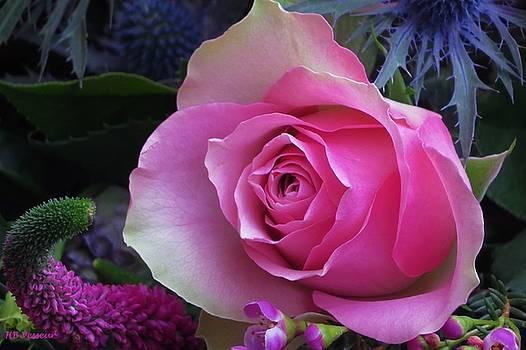 Winter Rose by B Vesseur