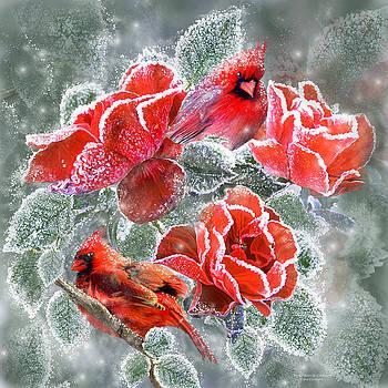 Carol Cavalaris - Winter Roses And Cardinals