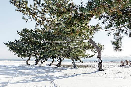 Lorrie Joaus - Winter scene