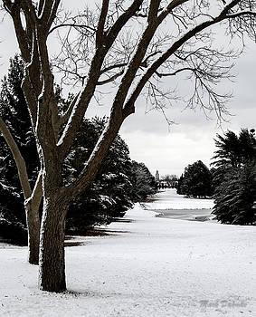 Winter Scene, Pioneers Park by Mark Dahmke