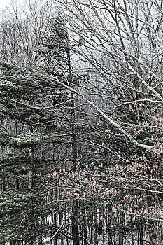 Chris Honeyman - Winter scene, West Virginia 2015