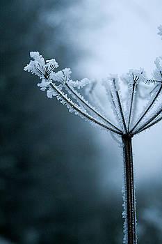 Winter Season by Aakash Sharma