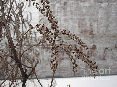 Winter Seed Pods by Brandy Woods