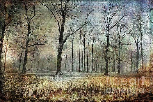 Winter Serenity by Randi Grace Nilsberg