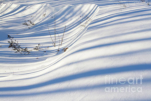 Winter Shadows by Denise Lilly