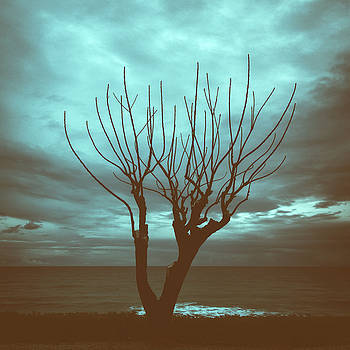 Winter Sky by Stelios Kleanthous