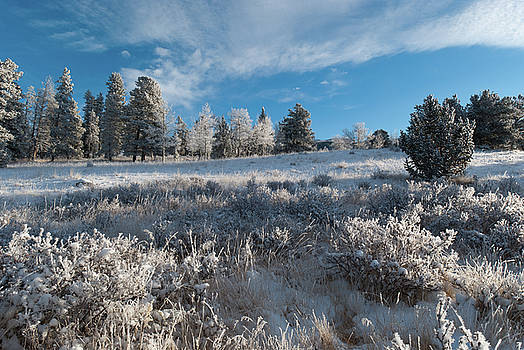 Winter Snow at Kenosha Pass by Cascade Colors