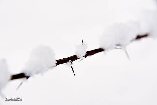 LeeAnn McLaneGoetz McLaneGoetzStudioLLCcom - Winter snow covered thorns