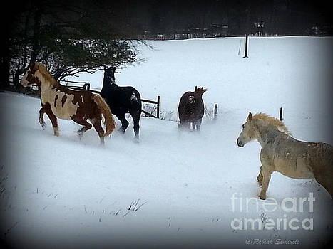 Winter Snow by Rabiah Seminole