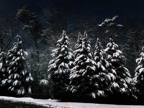 Winter Snow by Sheryl Bergman