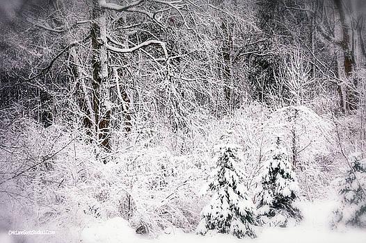 Winter Snow Storm 2018 by LeeAnn McLaneGoetz McLaneGoetzStudioLLCcom