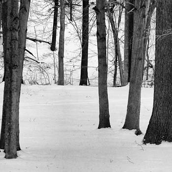 #winter #snow #tree #trees #bw by Pete Michaud