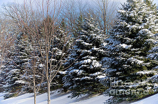 Winter Solitude by Deb Halloran