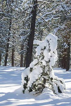 Winter Solitude by Karen Nitz