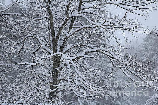 Sandra Huston - Winter Solitude