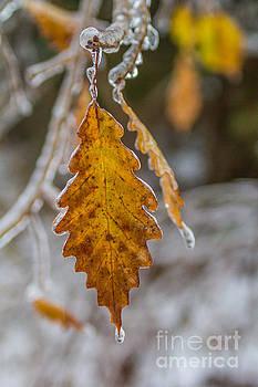 Winter Splendor by Jim McCain