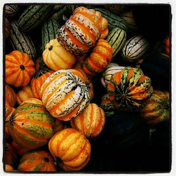 Winter Squash At Farmers Market by Tammy Winand