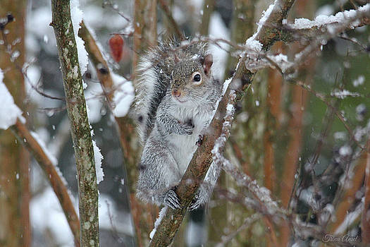 Winter Squirrel by Trina Ansel