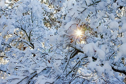 Winter Starburst by Laura Greene