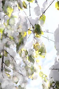 Winter Studies #8 by Sue Thomson