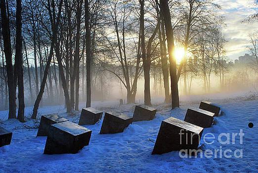 Winter Sun by Bill Thomson