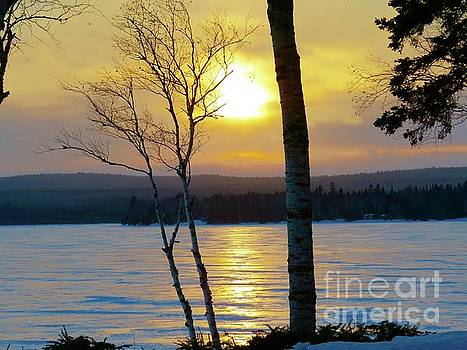 Winter sun by Brenda Ketch