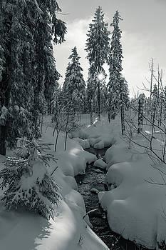 winter sun in Upper Harz - monochrome version by Andreas Levi