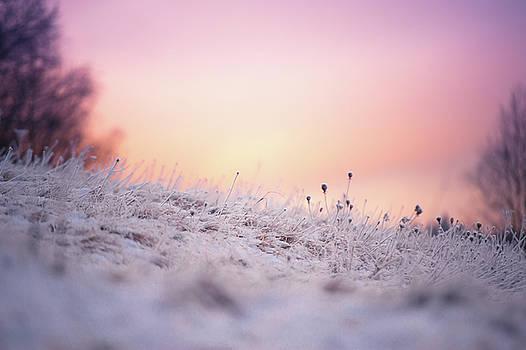 Jenny Rainbow - Winter Sun Salutation