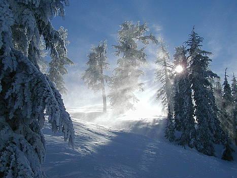 Winter Sunburst by Mark Stevenson