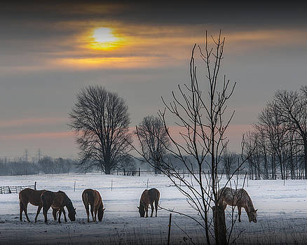 Randall Nyhof - Winter Sunrise over a Pasture with Horses