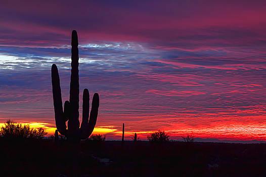 Winter Sunrise by Ryan Seek