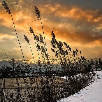 Chris Bordeleau - Winter sunrise through the reeds - Square