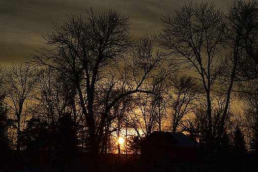 Winter Sunset  by Dacia Doroff
