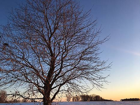 Winter Sunset from the Front Porch by Kaira Lansing