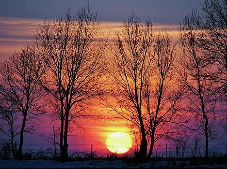 Winter Sunset  by Lori Frisch