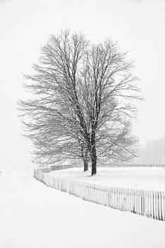 Winter Tree And Fence by Rod Flauhaus