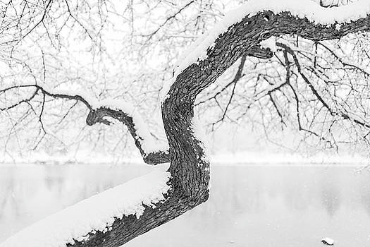 Lorrie Joaus - Winter Tree black and white