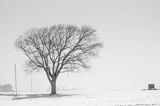 Winter Tree by Dan Lease