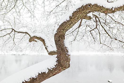 Lorrie Joaus - Winter Tree