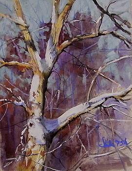 Winter Tree Study by Tom Christopher