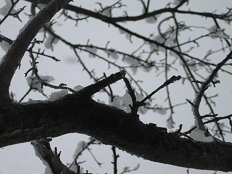 Winter Trees 2 by Linnea Tober