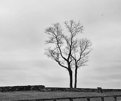 Winter Trees and Fences by Nancy De Flon