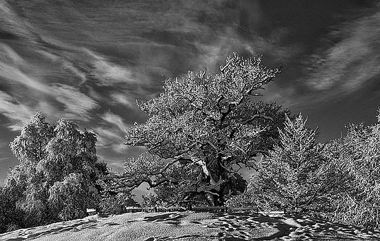 Winter Trees by Mark Denham