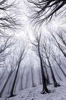 Winter trees by Massimo Discepoli