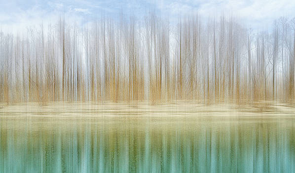 Winter trees on a river bank reflecting into water by Robert FERD Frank